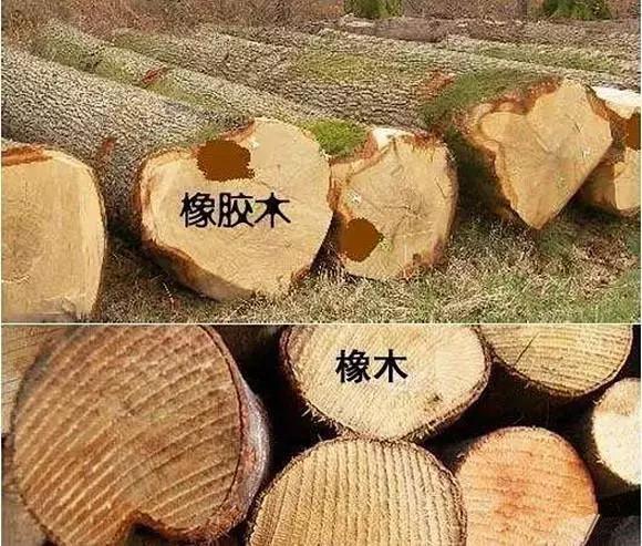 橡胶木区分